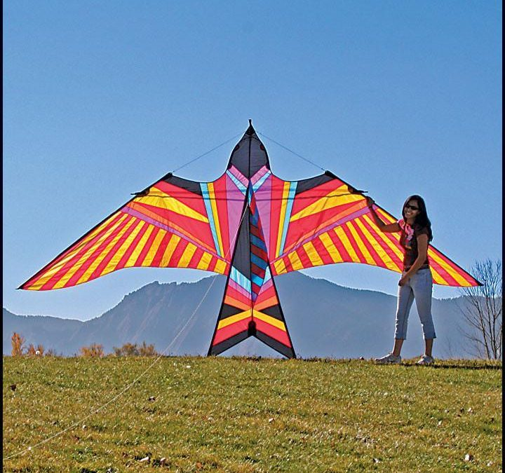 Kites & Road Trips